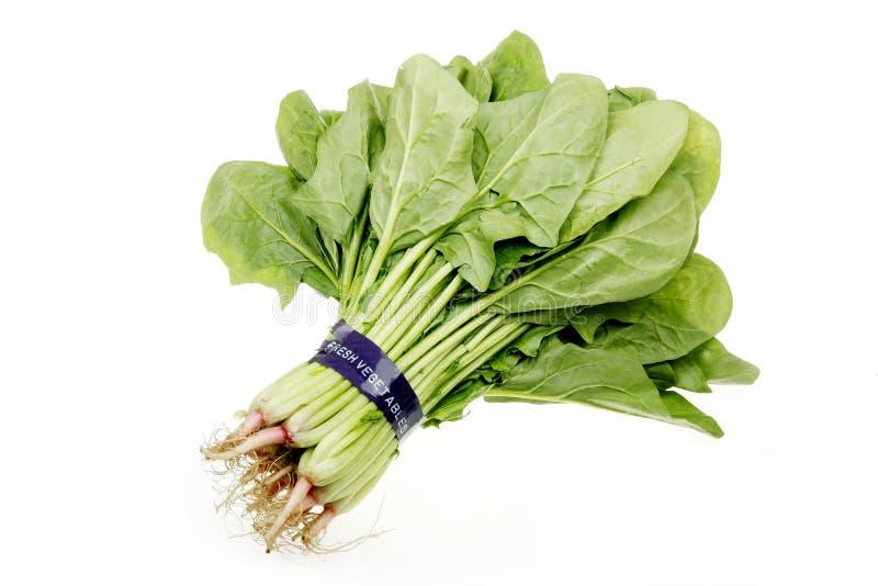 新鲜的菠菜 图库摄影