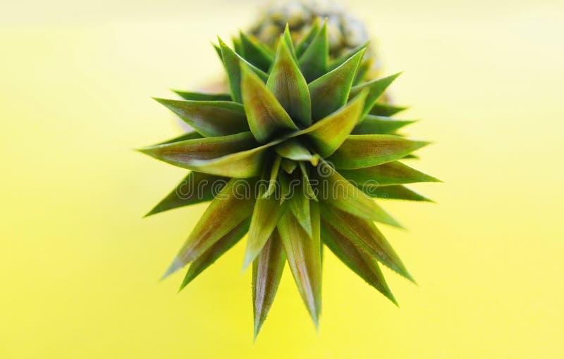 新鲜的菠萝夏天果子的关闭在黄色背景 库存图片