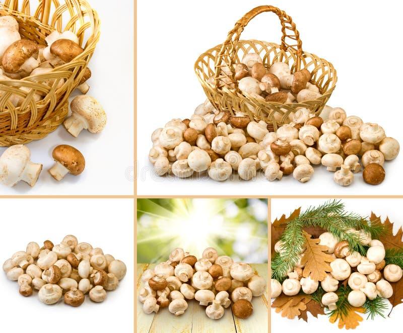 新鲜的蘑菇的图象 库存图片