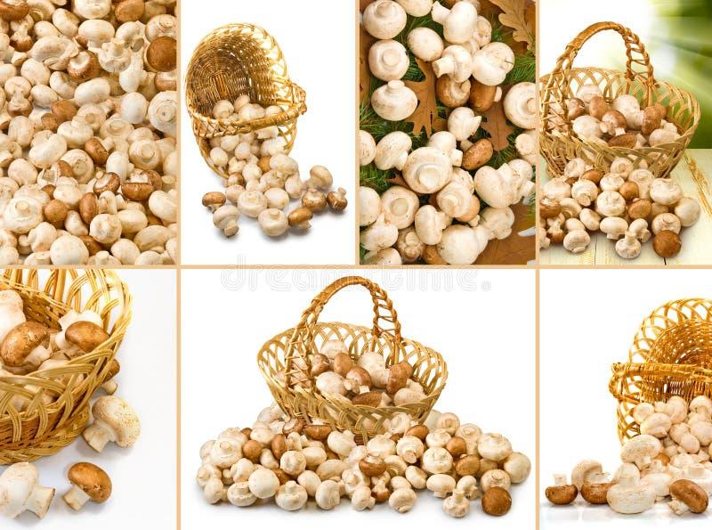 新鲜的蘑菇的图象 免版税库存图片