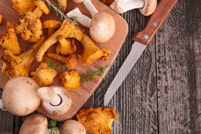新鲜的蘑菇 图库摄影