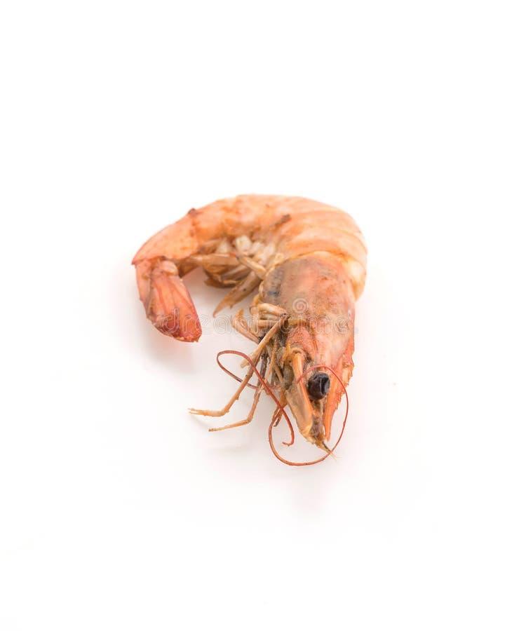 新鲜的虾/大虾 库存照片