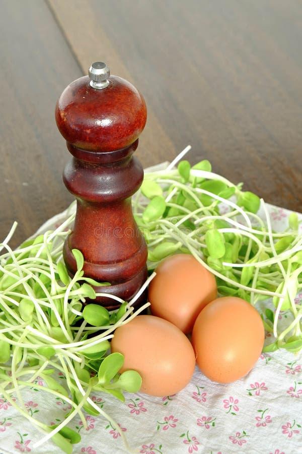 新鲜的蛋、胡椒和向日葵新芽 免版税库存照片