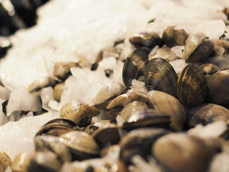 新鲜的蛤蜊在市场上 图库摄影