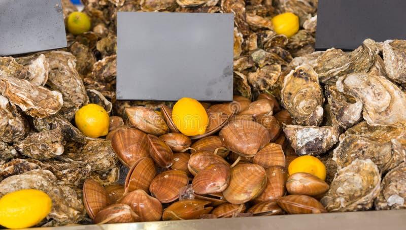 新鲜的蛤蜊待售在市场上 免版税库存照片