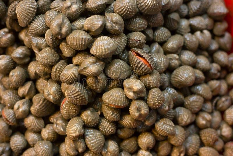 新鲜的蛤蜊贝类海鲜新鲜市场 免版税库存图片
