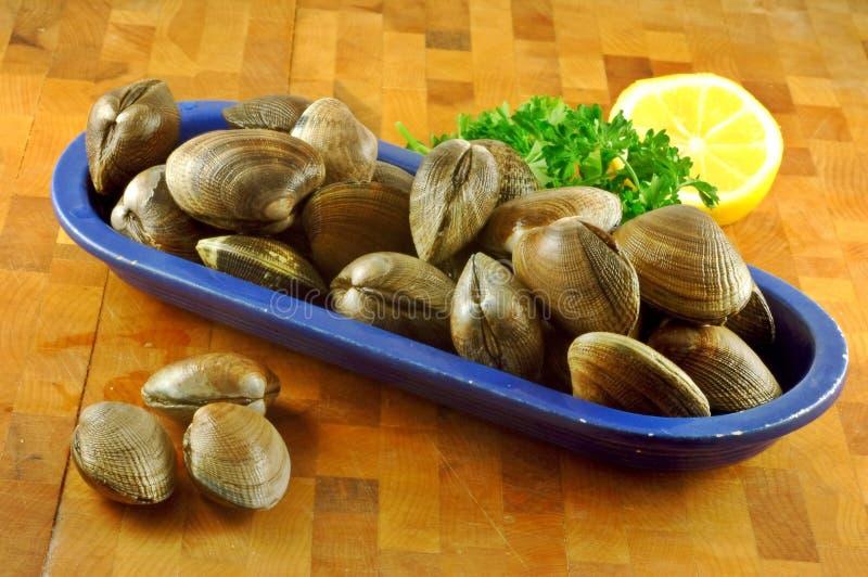 新鲜的蛤蜊 免版税库存图片
