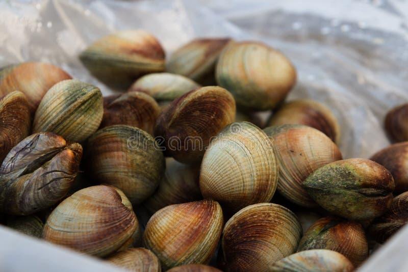 新鲜的蛤蜊 库存图片