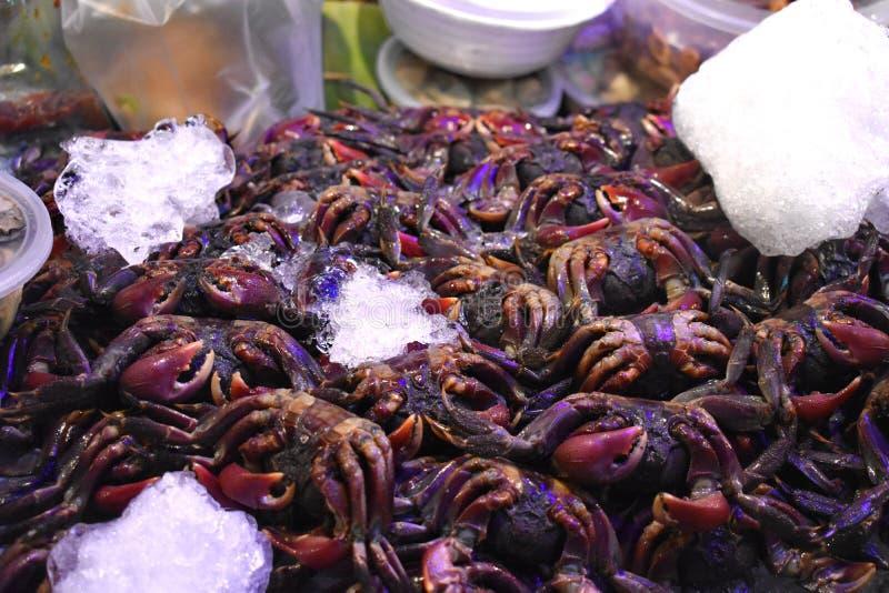 新鲜的螃蟹 库存图片