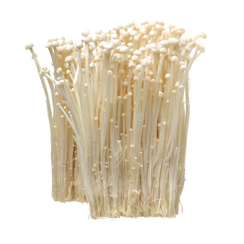 新鲜的金黄针蘑菇 免版税库存图片