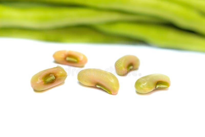 新鲜的长的豆,在白色背景的豇豆 免版税库存照片