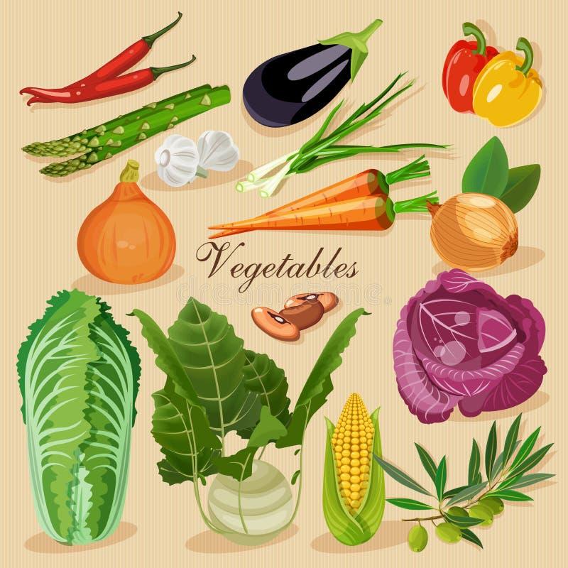 新鲜的集蔬菜 绿色副食品 向量例证