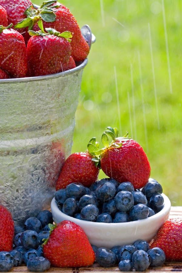 新鲜的雨草莓 图库摄影