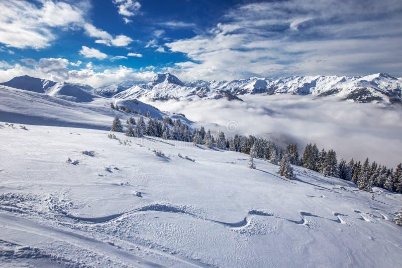 新鲜的雪盖的树在从Kitzbuehel滑雪胜地的奥地利阿尔卑斯 免版税库存图片