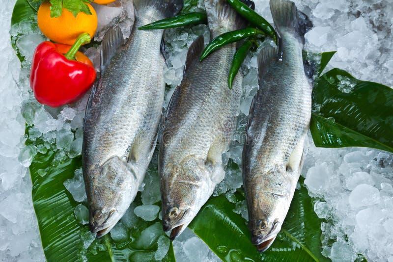 新鲜的雪鱼和蔬菜 免版税图库摄影