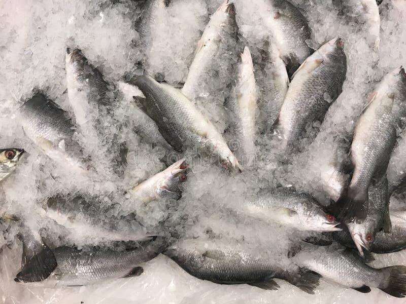 新鲜的雪鱼 免版税库存照片