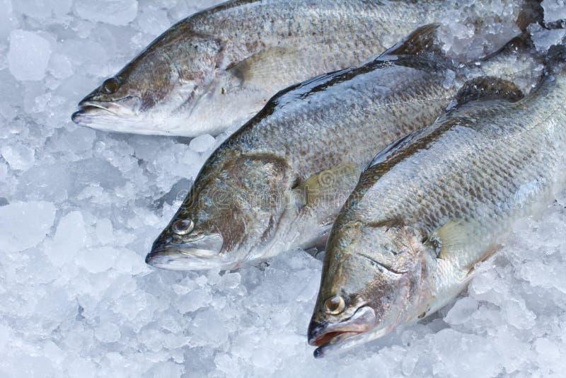新鲜的雪鱼 免版税图库摄影