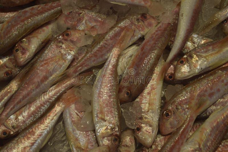 新鲜的鱼 在冰面包屑的鱼 免版税库存照片