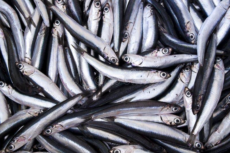 新鲜的鲥鱼 免版税库存照片