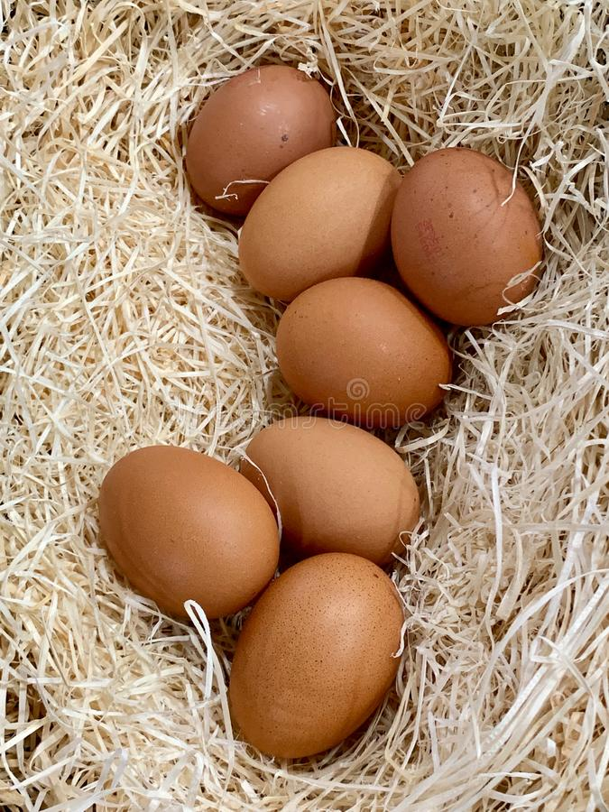 新鲜的鸡蛋特写镜头在嘿巢的 免版税库存图片