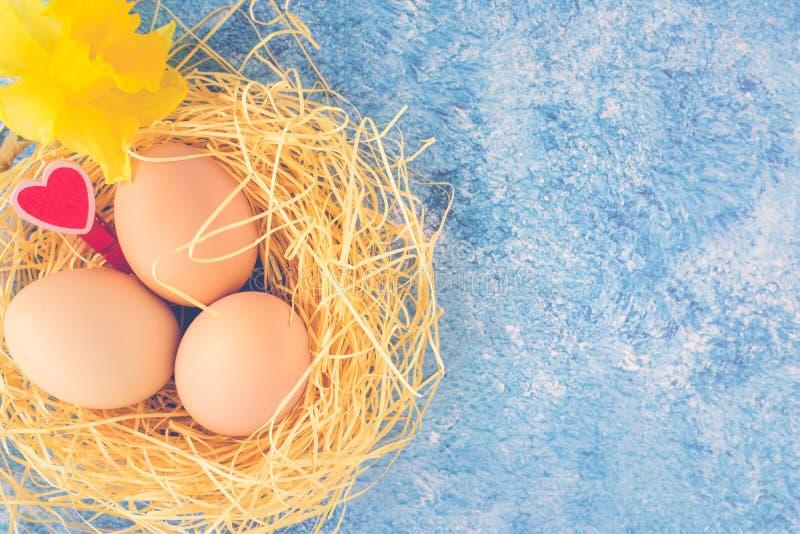 新鲜的鸡鸡蛋顶视图在秸杆巢、红心和黄水仙的在蓝色织地不很细背景 愉快复活节的问候 免版税库存照片