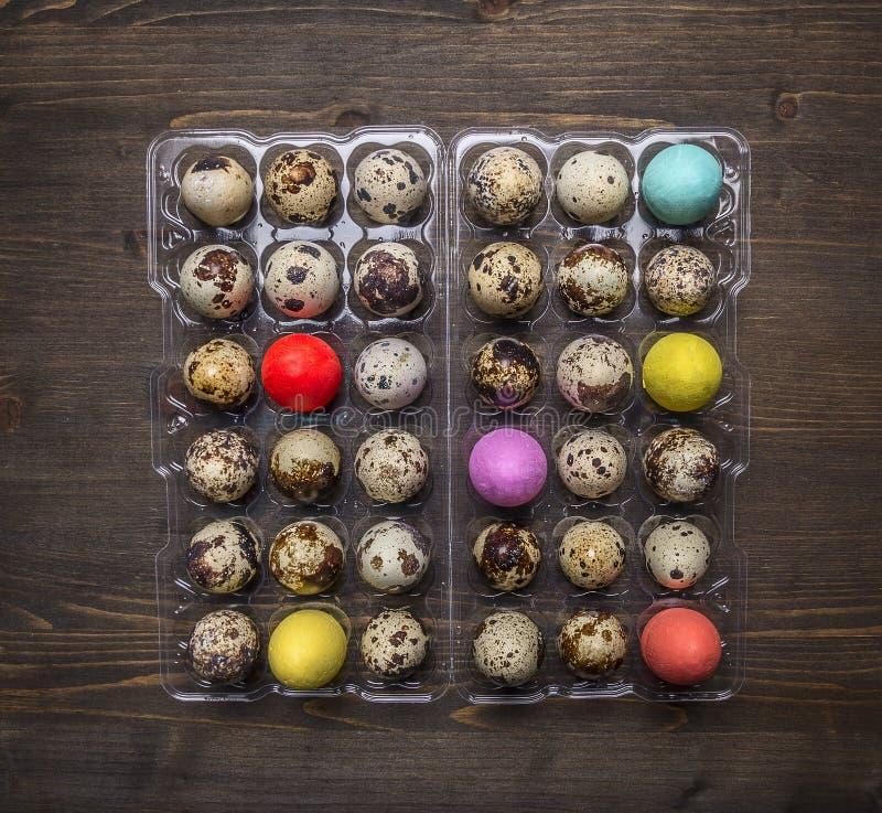 新鲜的鹌鹑蛋塑料盒用复活节的装饰鸡蛋在木土气背景顶视图关闭 免版税图库摄影