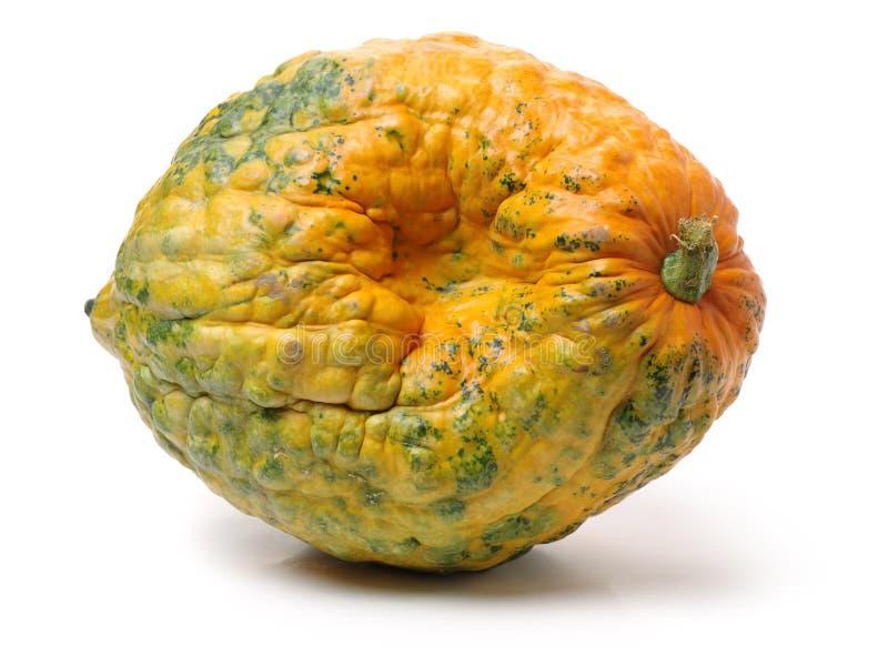 新鲜的黄绿色南瓜 免版税库存图片