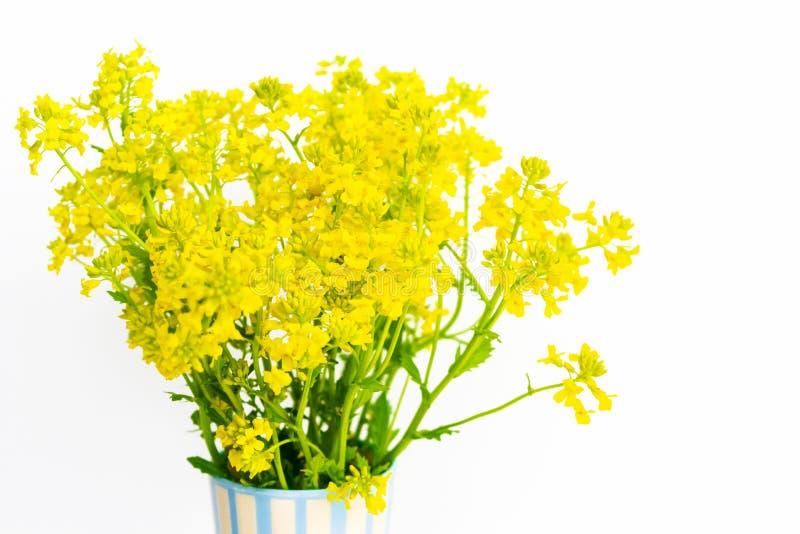 新鲜的黄色在白色背景的一个花瓶花架 r 库存照片