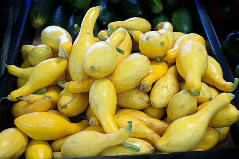 新鲜的黄色夏天弯颈南瓜 免版税库存照片