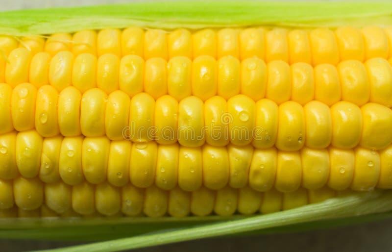 新鲜的黄色甜玉米特写镜头 对食物概念 免版税图库摄影