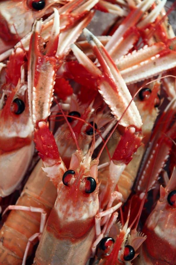 新鲜的龙虾 免版税库存照片