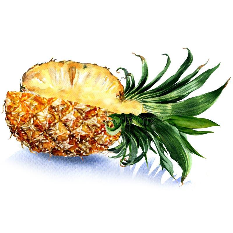 新鲜的水多的切的菠萝果子,被隔绝,在白色的水彩例证 向量例证
