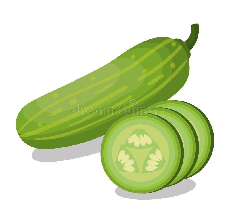 新鲜的黄瓜菜被隔绝的象 库存例证