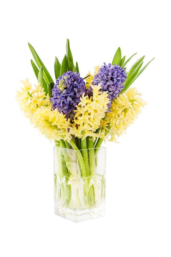 新鲜的黄色和紫色风信花花束在花瓶开花 查出在白色 库存照片