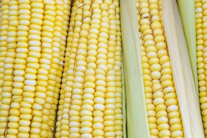 新鲜的黄色玉米棒子关闭  免版税图库摄影