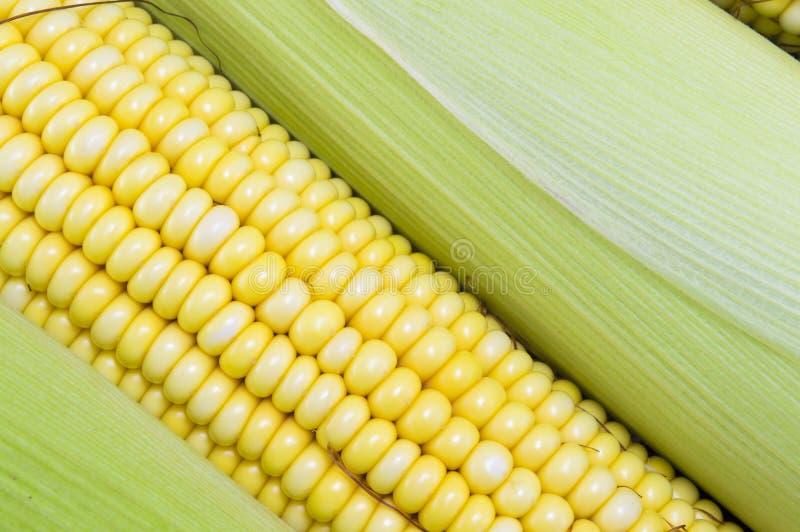 新鲜的黄色玉米棒子关闭  免版税库存图片
