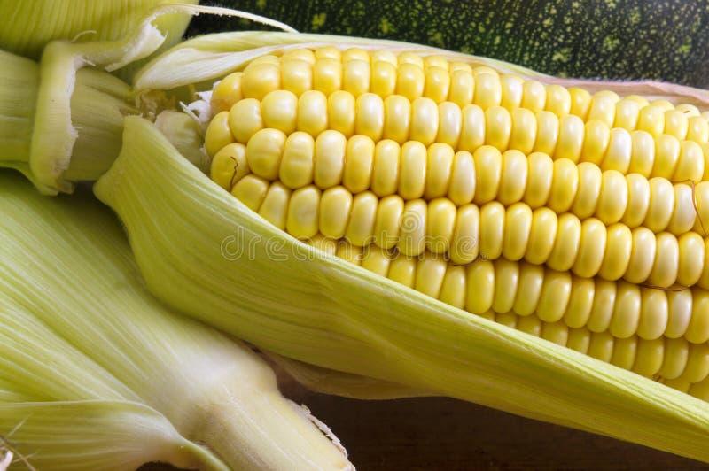 新鲜的黄色玉米棒子 图库摄影