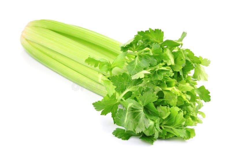 新鲜的绿色芹菜 库存照片