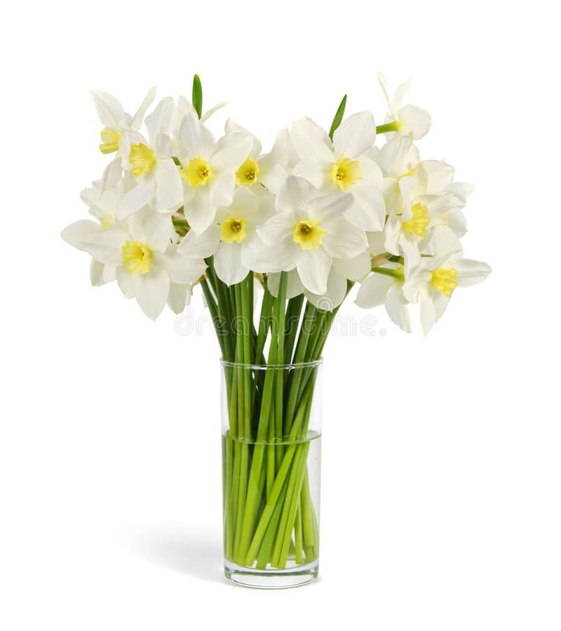 新鲜的水仙花束  库存图片
