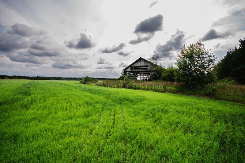 新鲜的绿草草甸 免版税库存图片