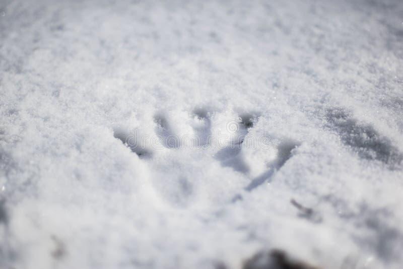 新鲜的handprint雪 免版税库存图片