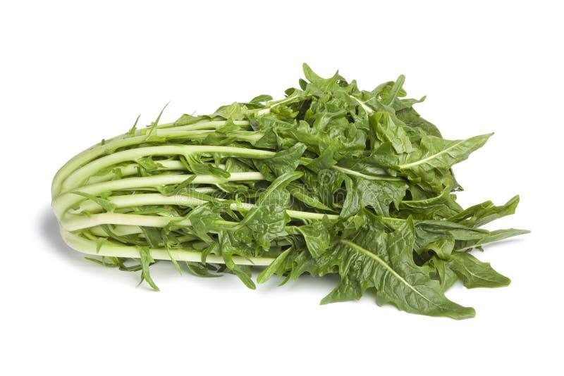 新鲜的puntarelle蔬菜 库存照片