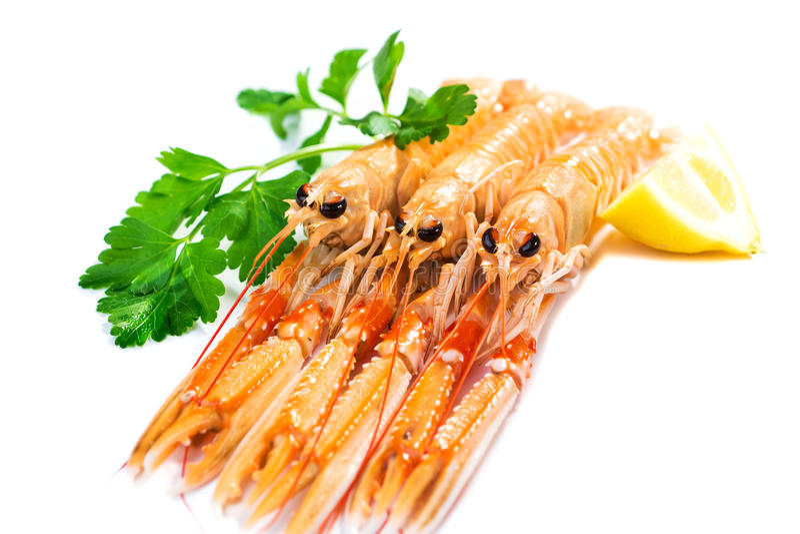 新鲜的Scampi/海螯虾norvegicus 库存照片