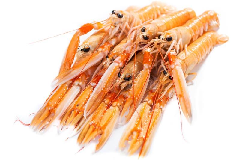 新鲜的Scampi/海螯虾norvegicus 库存图片