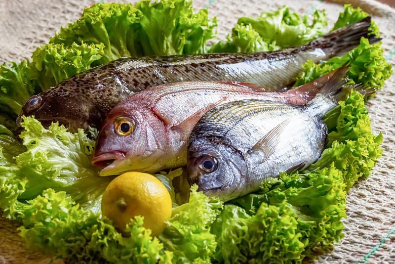 新鲜看见低音和海鲷与有些成份在蔬菜沙拉用柠檬 库存照片