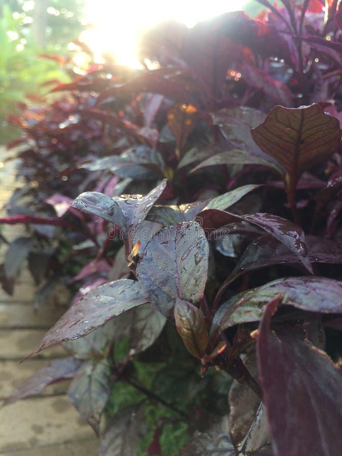 新鲜红色的叶子 库存照片