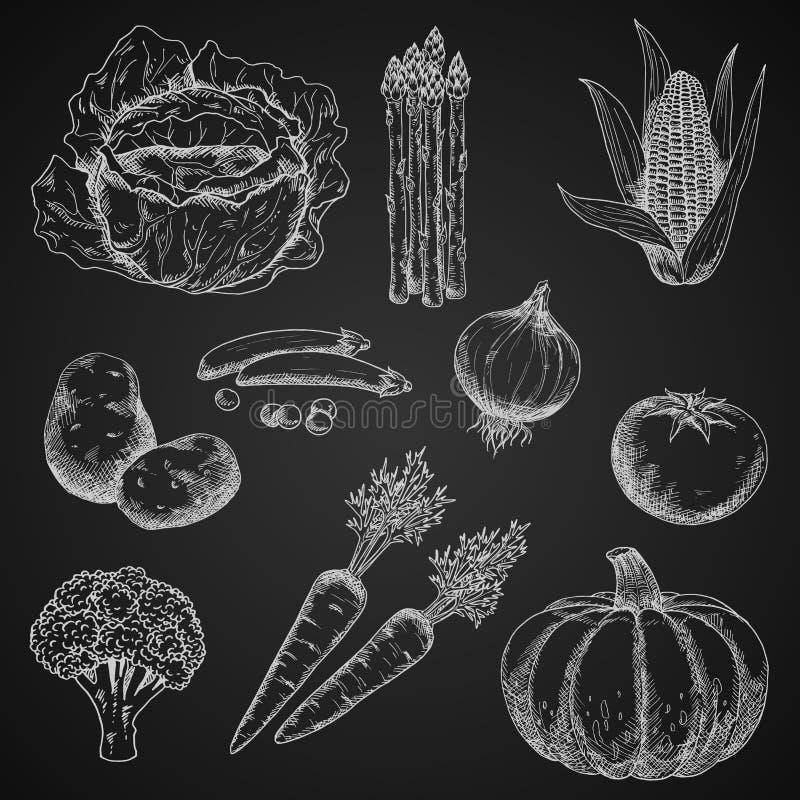 新鲜蔬菜白垩剪影  库存例证