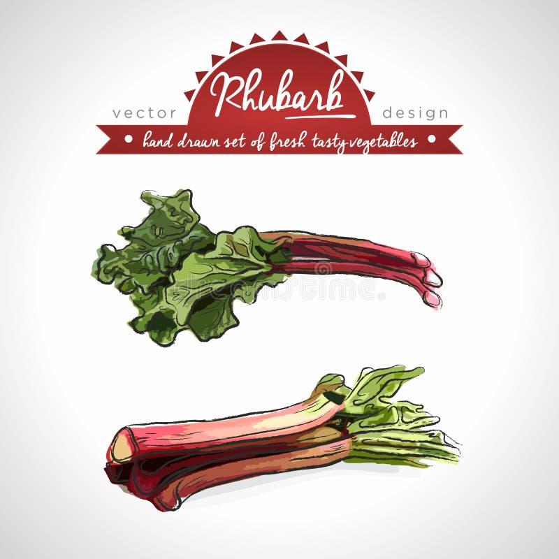 新鲜蔬菜的大黄汇集与叶子的 r ?? 向量例证