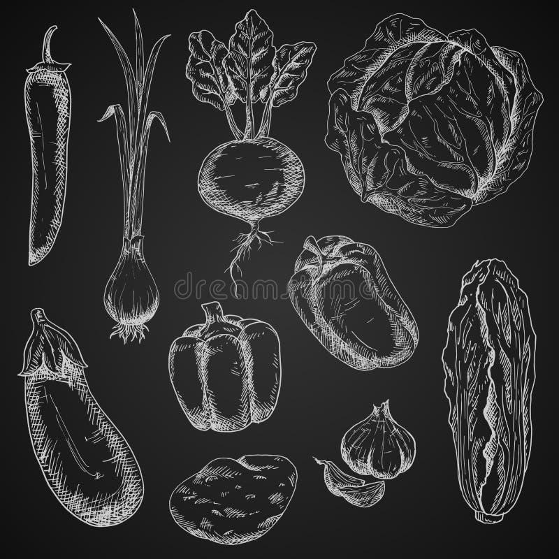 新鲜蔬菜被设置的白垩剪影 向量例证