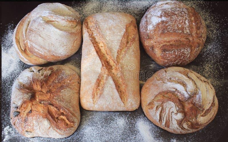 新鲜面包的分类在黑背景的 虚构,成功的商人或者开始的概念 免版税图库摄影